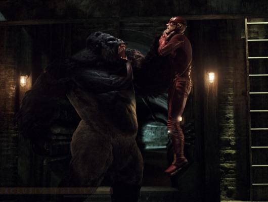 Grodd le gorille